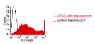 DM1202 - CD66e / CEACAM5