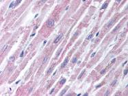 AP07367PU-N - CD282 / TLR2