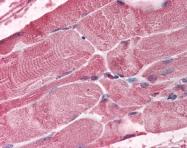AP07560PU-N - BMI-1 / RNF51