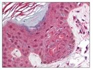 AP07723PU-N - CD279 / PD1