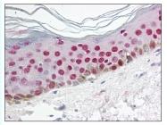 AP07804PU-N - Uracil-DNA glycosylase 2 / Cyclin-O