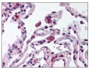 AP07839PU-N - CD289 / TLR9