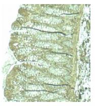 AP02805PU-N - PDCD4