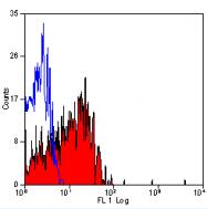 BM311PT - CD62E / E-Selectin