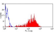 AM05567RP-N - CD62P / P-Selectin