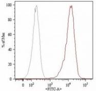 SM3078F - CD105 / Endoglin