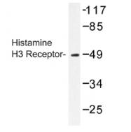 AP01216PU-N - Histamine H3 receptor