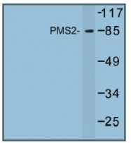 AP01248PU-N - PMS2