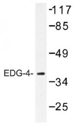 AP01254PU-N - EDG4 / LPAR2