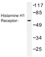 AP01271PU-N - Histamine H1 receptor