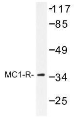 AP01272PU-N - MC1-R