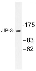 AP01286PU-N - JIP-3