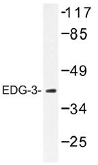 AP01309PU-N - EDG3 / S1P3