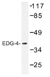 AP01310PU-N - EDG4 / LPAR2