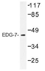AP01312PU-N - EDG7 / LPAR3