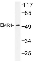 AP01313PU-N - EMR4P / GPR127