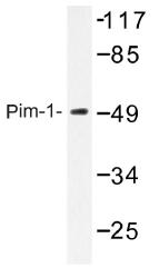 AP01350PU-N - PIM1