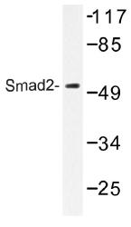 AP01355PU-N - SMAD2