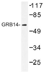 AP01405PU-N - GRB14