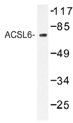 AP01409PU-N - ACSL6