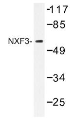 AP01412PU-N - NXF3