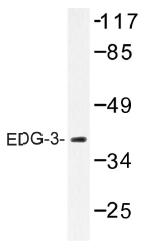 AP01423PU-N - EDG3 / S1P3