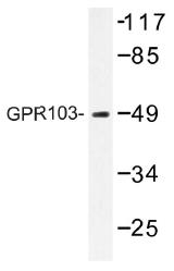 AP01429PU-N - QRFPR / GPR103