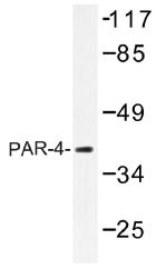 AP01439PU-N - PAR4 / PAWR