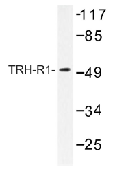AP01441PU-N - TRHR1
