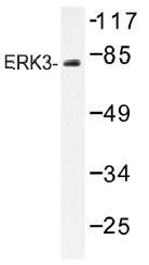 AP01450PU-N - MAPK6 / ERK3