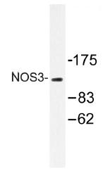 AP01459PU-N - NOS3
