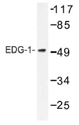 AP01462PU-N - EDG1 / S1P1