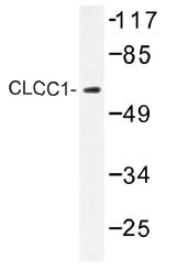 AP01467PU-N - CLCC1