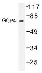 AP01473PU-N - TUBGCP4