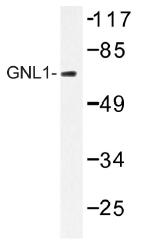 AP01479PU-N - GNL1 / HSR1