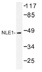 AP01490PU-N - NLE1
