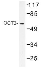 AP01492PU-N - OCT3/4