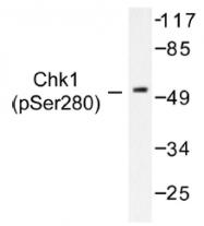 AP01553PU-N - CHK1