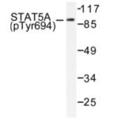 AP01696PU-N - STAT5 / STAT5A