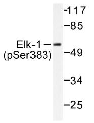 AP01577PU-N - ELK1