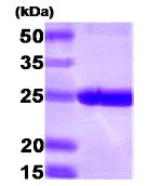 AR09153PU-N - PSMB1