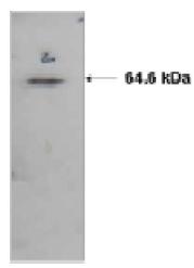 AM05383PU-N - ATIC / PURH