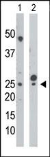 AP15097PU-N - CMPK1