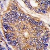 AP14924PU-N - LDLRAP1