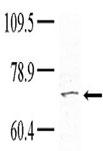 AP14482PU-N - TNK1