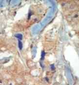 AP14352PU-N - CD135 / FLT3