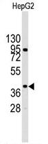 AP13906PU-N - MAP kinase p38 alpha / MAPK14