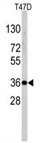 AP11359PU-N - NANOS1