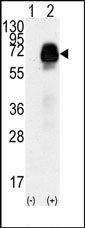AP13726PU-N - AMHR2