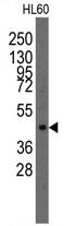 AP11391PU-N - LMX1A